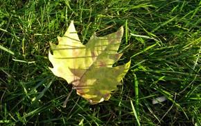Picture autumn, grass, macro, sheet, grass, autumn, macro, leav, fall