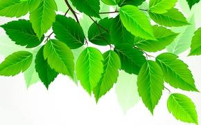 Wallpaper leaves, green, birch