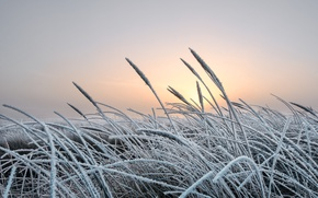 Picture cold, winter, frost, grass, nature