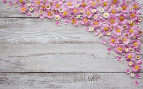 Picture flowers, background, Board, chamomile, wood, Tachinska Marina