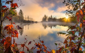 Picture Autumn, RED, Lake, Forest