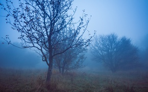Picture Fog, Night, Autumn, Fall, Night, Autumn, Fog