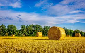 Picture field, hay, bale