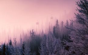 Picture winter, nature, fog