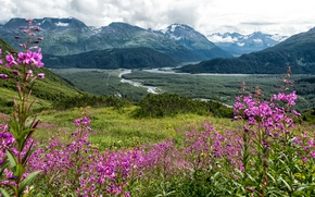 Picture forest, grass, clouds, flowers, mountains, valley, slope, Alaska, Seward