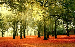 Picture autumn, leaves, the sun, trees, Park