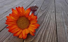 Picture flower, background, leaf, blooms