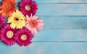 Picture flowers, background, yellow, colorful, pink, gerbera, chrysanthemum, yellow, wood, pink, flowers, spring, gerbera