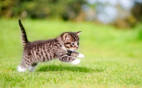 Picture kitty, jump, baby