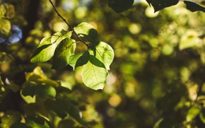 Picture autumn, leaves, trees, nature, Sunny, the rays of the sun, trees, autumn, morning, autumn colors, ...