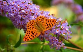 Picture Macro, Butterfly, Flowers, Flowers, Macro, Butterfly