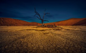 Picture the sky, cracked, tree, earth, desert, drought