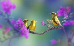 Picture flowers, branch, birds, white-eyed, white eye