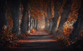 Wallpaper nature, autumn, trees, road