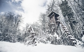 Picture winter, forest, tower