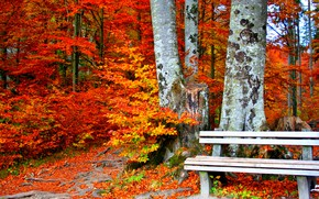 Picture bench, yellow leaves, autumn Park