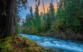 Picture forest, nature, river, for, USA, Skykomish, Skykomish, Kevin Russell