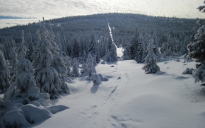 Picture Winter, Snow, Forest, Frost, Winter, Frost, Snow, Forest, The snow