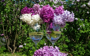 Picture spring, glasses, lilac, lilac, stemware