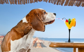 Picture sea, beach, the sun, cherry, orange, the situation, dog, humor, horizon, cocktail, lime, tube, drink, …