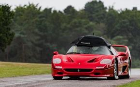 Picture umbrella, rain, the situation, sports car, Ferrari F50