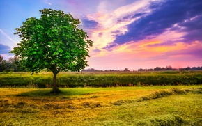 Picture field, the sky, grass, clouds, tree, meadow, chestnut