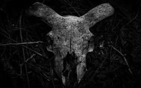 Picture forest, Minimalism, Skull