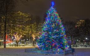 Wallpaper lights, holiday, tree, new year