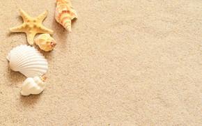 Picture sand, star, shell, sand, starfish, seashells