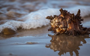Picture sea, water, reflection, shell
