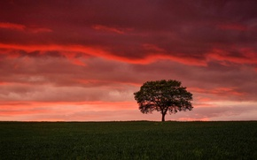 Picture field, clouds, tree, glow