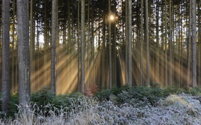 Picture winter, forest, light, fog