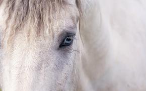 Wallpaper eyes, background, horse