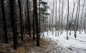 Picture winter, forest, nature
