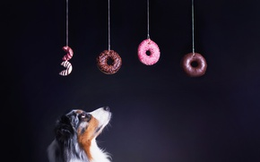 Picture background, dog, bagels