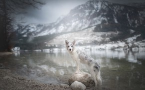 Picture mountains, river, stones, dog