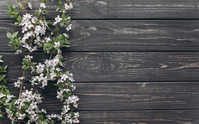Picture flowers, branches, Flowers, spring, wooden background