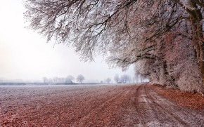 Picture frost, road, field, trees