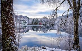 Picture winter, trees, reflection, village, Norway, houses, Norway, the fjord, Sogn and Fjordane, Flekke, Flekkefjorden
