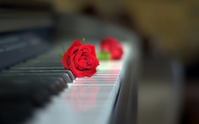 Picture style, rose, Bud, keyboard, red rose, piano, bokeh