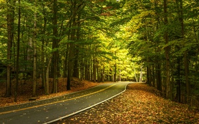 Picture road, autumn, forest, leaves, trees, the state of new York, State Park Letchworth, Letchworth State …