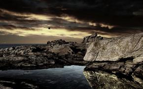 Picture sea, night, rocks, bird
