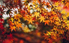 Wallpaper leaves, autumn, branches