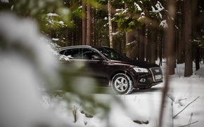 Picture car, machine, auto, forest, fog, Audi, audi, race, car, sports car, car, need for speed, …
