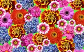 Wallpaper texture, different, flowers