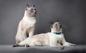 Picture Cats, Background, A couple
