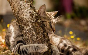 Picture bokeh, hugs, tabby cat, the trunk of the tree