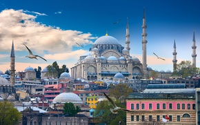 Picture the sky, clouds, birds, seagulls, home, tower, temple, Istanbul, Turkey, The blue mosque