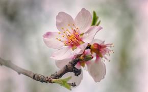 Picture tree, spring, flowering, flowers