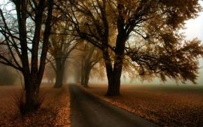 Wallpaper road, autumn, trees, fog